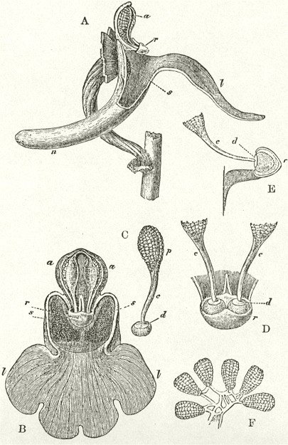 1862_Orchids_F800_fig01.jpg